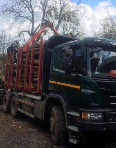 transport-drewna-palet-i-logistyka (15)