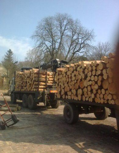 transport-drewna-palet-i-logistyka (8)